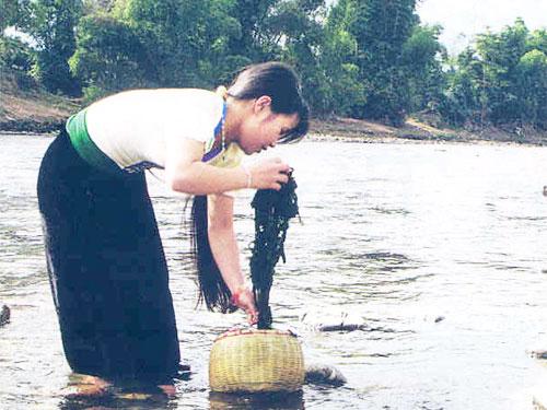 Thiếu nữ Thái hái rêu bên suối (ảnh: internet)